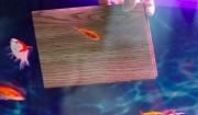 sàn gỗ siêu chịu nước