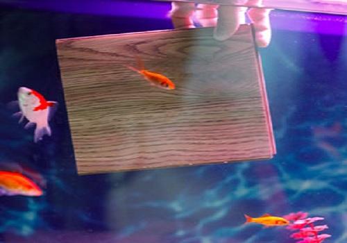 sàn gỗ công nghiệp siêu chịu nước